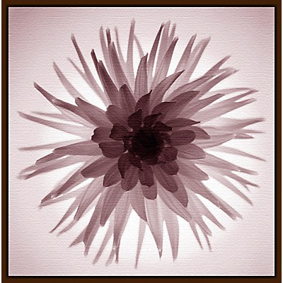 Gill Copeland – Translucent Flower Print
