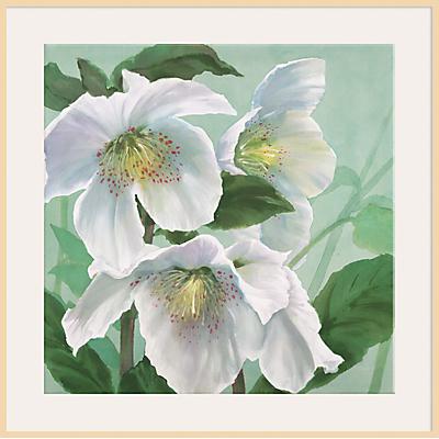 Maggie Thompson – Floral Splendour