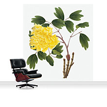 Buy Surface View Yellow Peony Mural Online at johnlewis.com