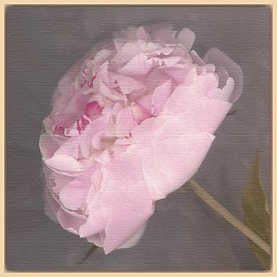 Erin Clark – Fleur
