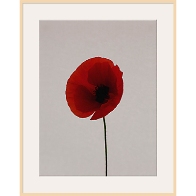 Claire Brooker – Red Poppy