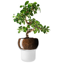 Buy Eva Solo Orchid and Bonsai Self Watering Pot, Frosted Online at johnlewis.com