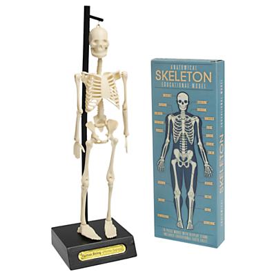 Image of Rex International Anotmical Skeleton