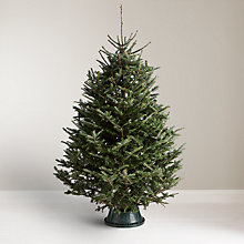 Buy John Lewis Fraser Fir Real Christmas Tree Online at johnlewis.com