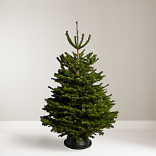 Buy John Lewis Nordmann Fir Real Christmas Tree Online at johnlewis.com