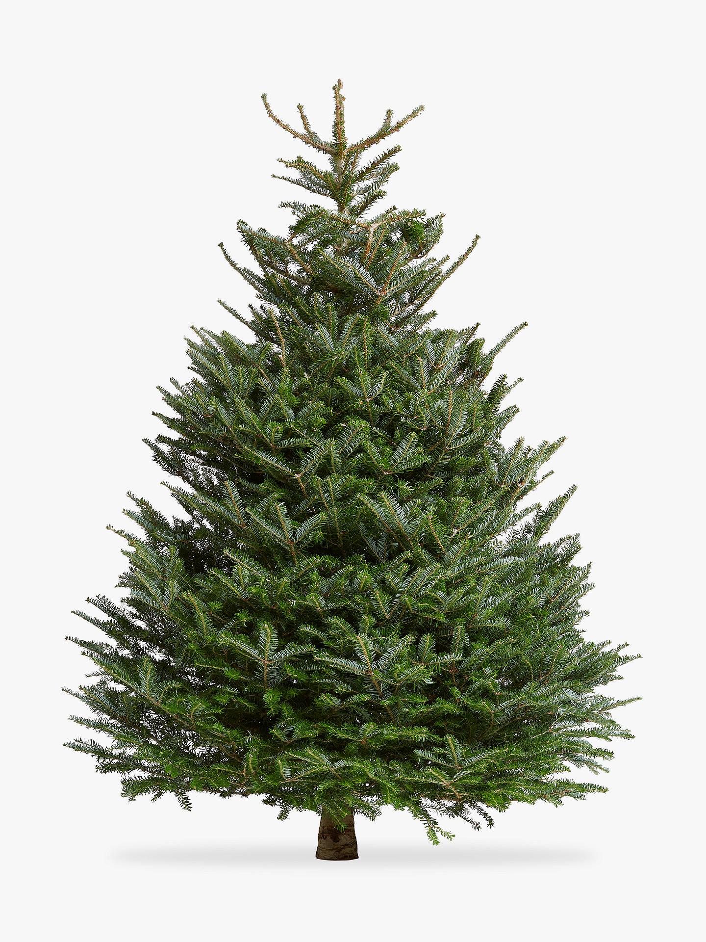 John Lewis Amp Partners Korean Fir Real Christmas Tree At