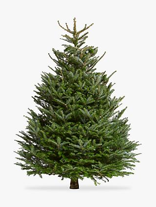 john lewis partners korean fir real christmas tree