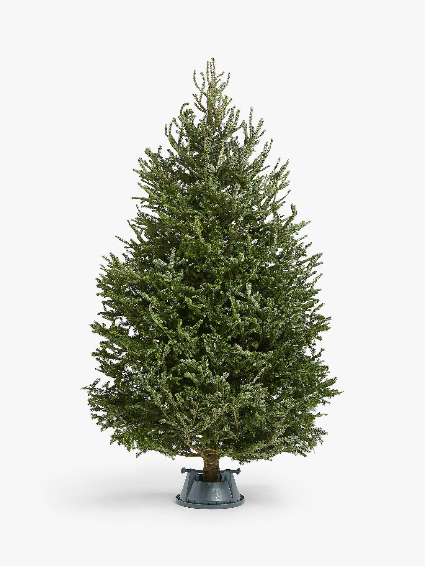 John Lewis Christmas Tree