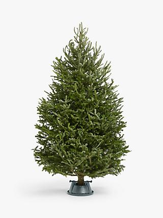 Images Of Christmas Trees.Christmas Trees Real Artificial Christmas Trees At John