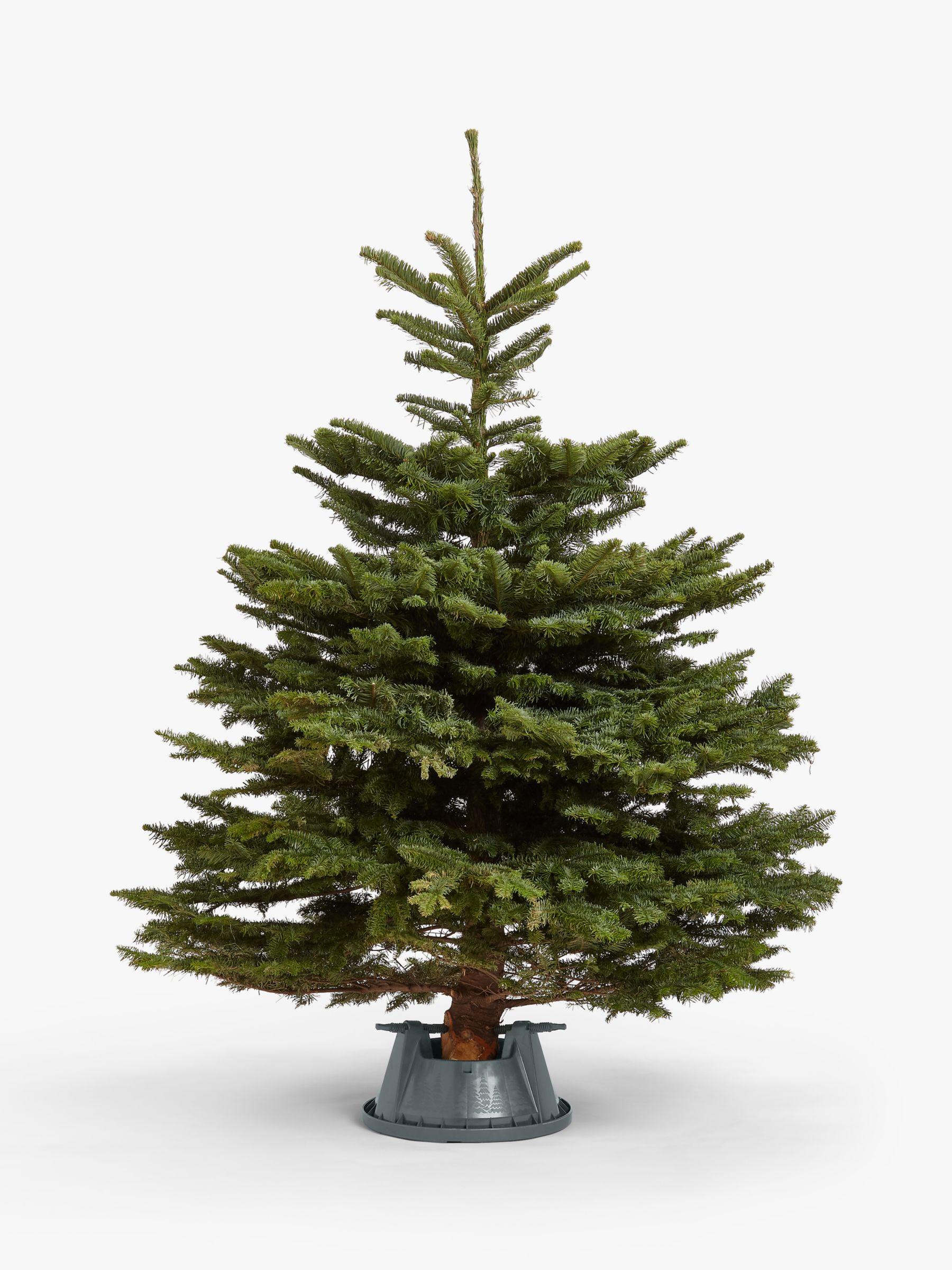Real Christmas Tree.John Lewis Partners Noble Fir Real Christmas Tree