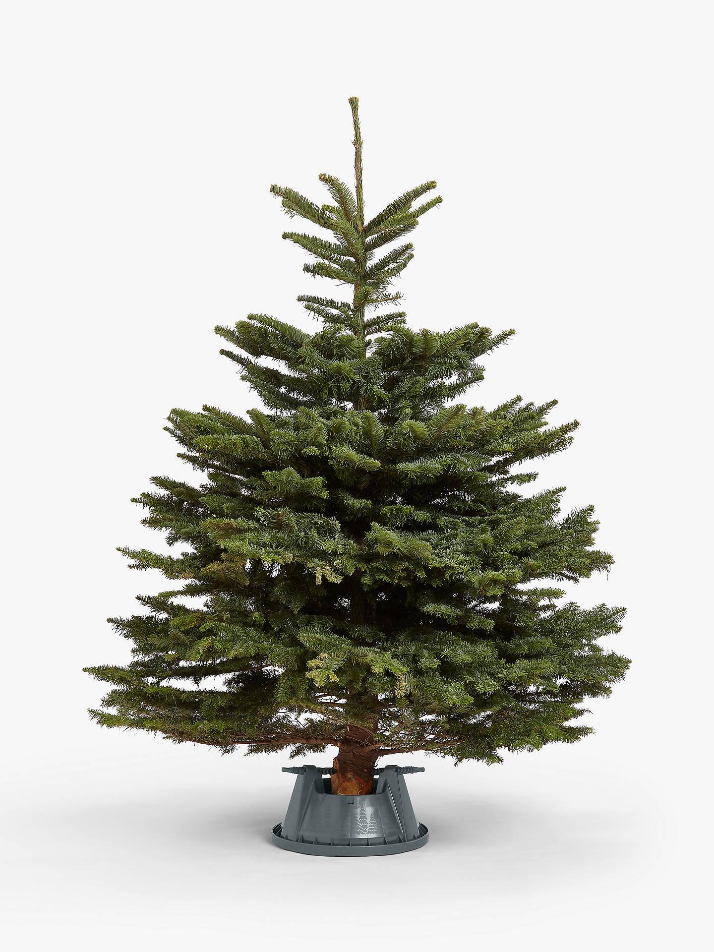 Real Christmas Trees Near Me.John Lewis Partners Noble Fir Real Christmas Tree