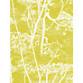 Cole & Son Cowparsley Wallpaper