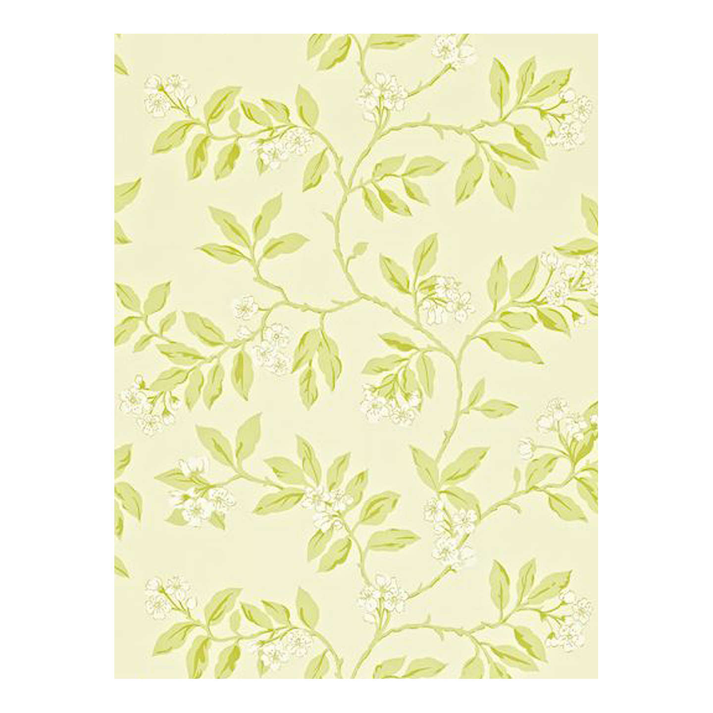 BuySanderson Blossom Bough Wallpaper, Cream/Sage Online at johnlewis.com