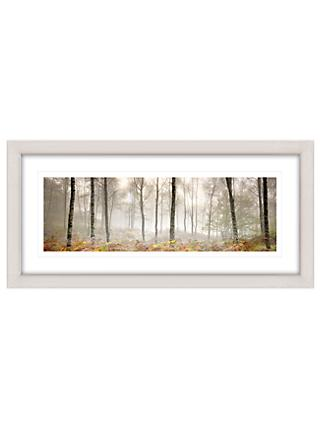 Mike Shepherd - Morning Woodland Framed Print, 52 x 107cm