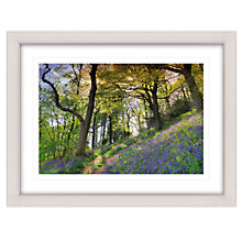 Buy Mike Shepherd - Bluebell Walk Framed Print, 67 x 87cm Online at johnlewis.com