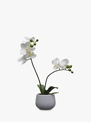 Artificial flowers plants silk flowers table centrepieces john house by john lewis artificial orchid white small mightylinksfo
