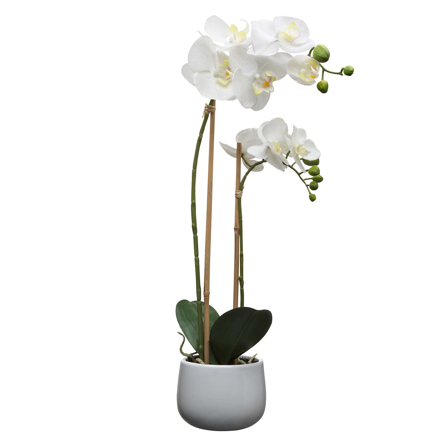 House by john lewis artificial orchid white large at john lewis buyhouse by john lewis artificial orchid white large online at johnlewis mightylinksfo