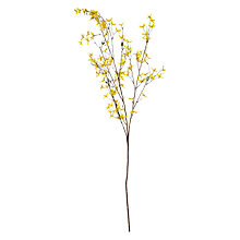 Buy Floralsilk Forsythia, Yellow Online at johnlewis.com