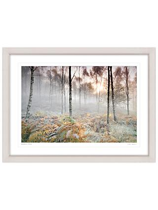 Mike Shepherd - Woodland Scene Framed Print, 81 x 107cm