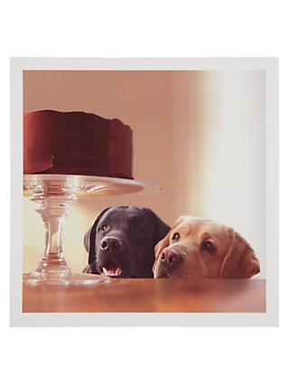 Woodmansterne Labradors Greeting Card