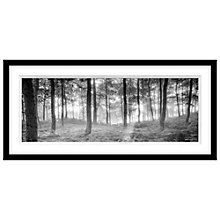 Buy Mike Shepherd - Misty Trees Framed Print, 49 x 104cm Online at johnlewis.com