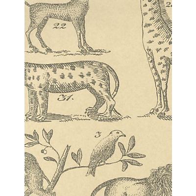 Image of Andrew Martin Ark Wallpaper