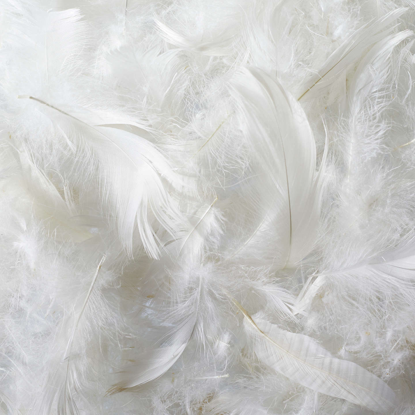 BuyJohn Lewis Natural Collection Siberian Goose Feather and Down Kingsize Pillow, Medium/Firm Online at johnlewis.com