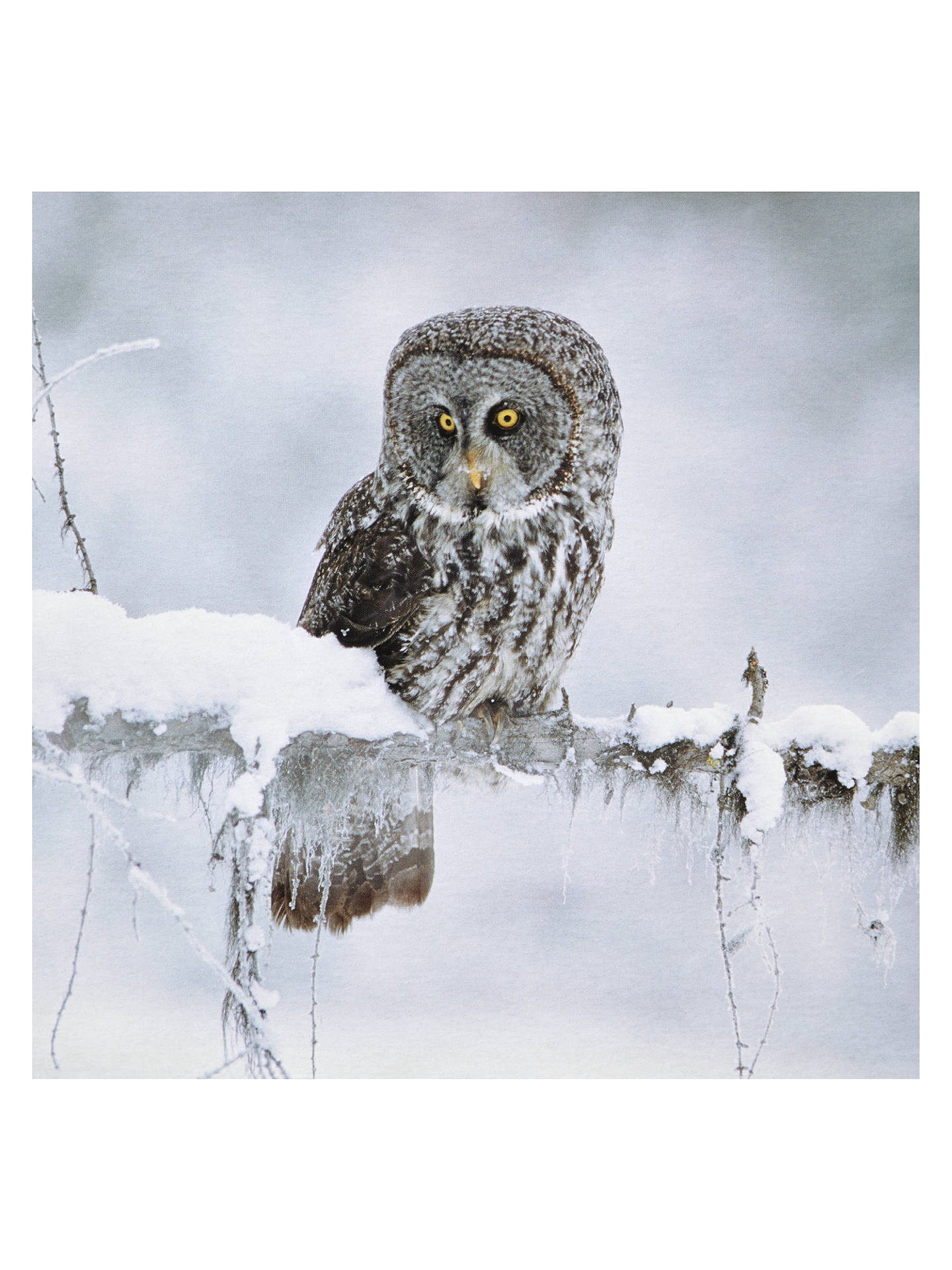 National Geographic Christmas Cards.Paperhouse National Geographic Great Grey Owl Christmas Card