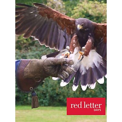 Red Letter Days Bird Of Prey Falconry Experience