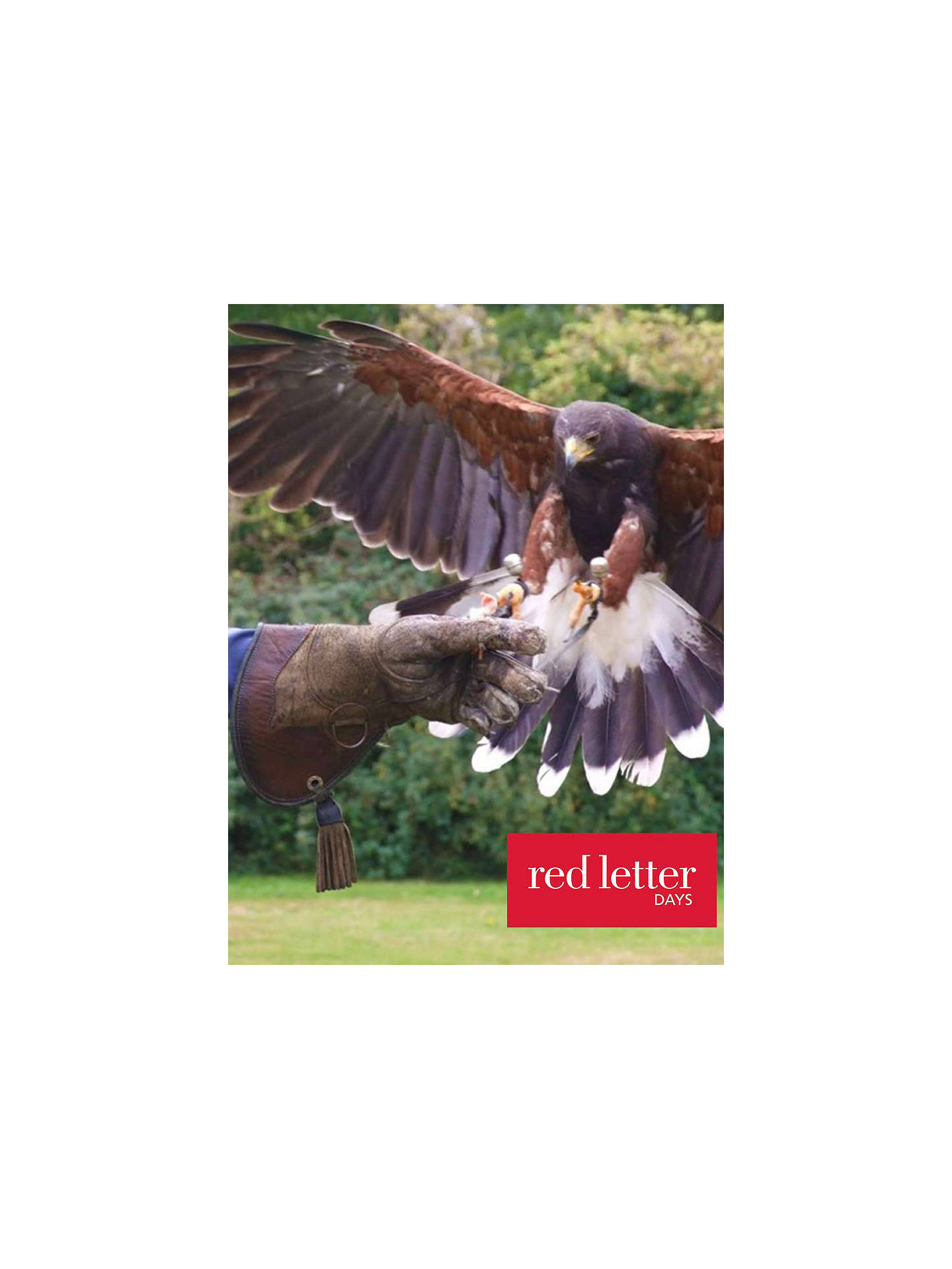 BuyRed Letter Days Bird Of Prey Falconry Experience Online at johnlewis.com