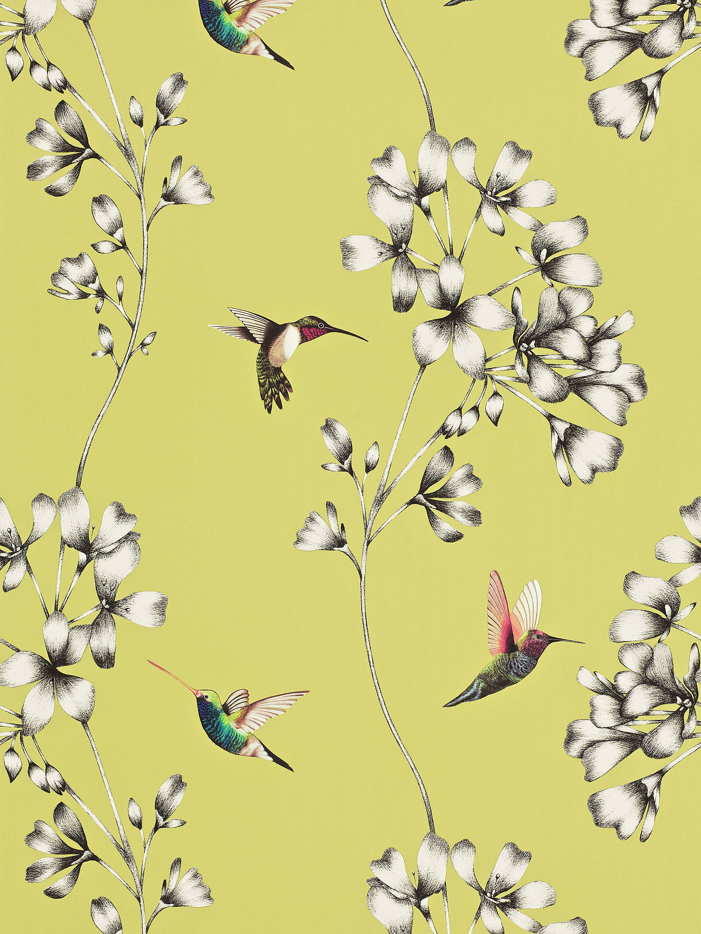 Buy Harlequin Amazilia Wallpaper, Gooseberry, 111061 Online at johnlewis.com