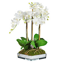 Buy Artificial Peony Phalaenopsis in Mirrored Planter, White Online at johnlewis.com
