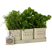 Buy Burgon & Ball Cream Herb Pots Online at johnlewis.com