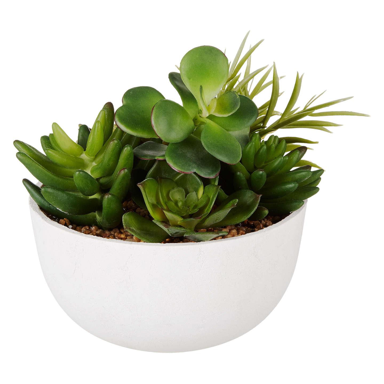 john lewis artificial mixed succulents pot at john lewis. Black Bedroom Furniture Sets. Home Design Ideas