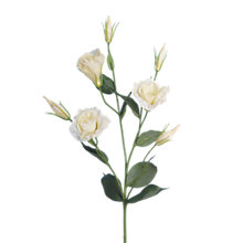 Buy Floralsilk Lisianthus Spray, Cream Online at johnlewis.com
