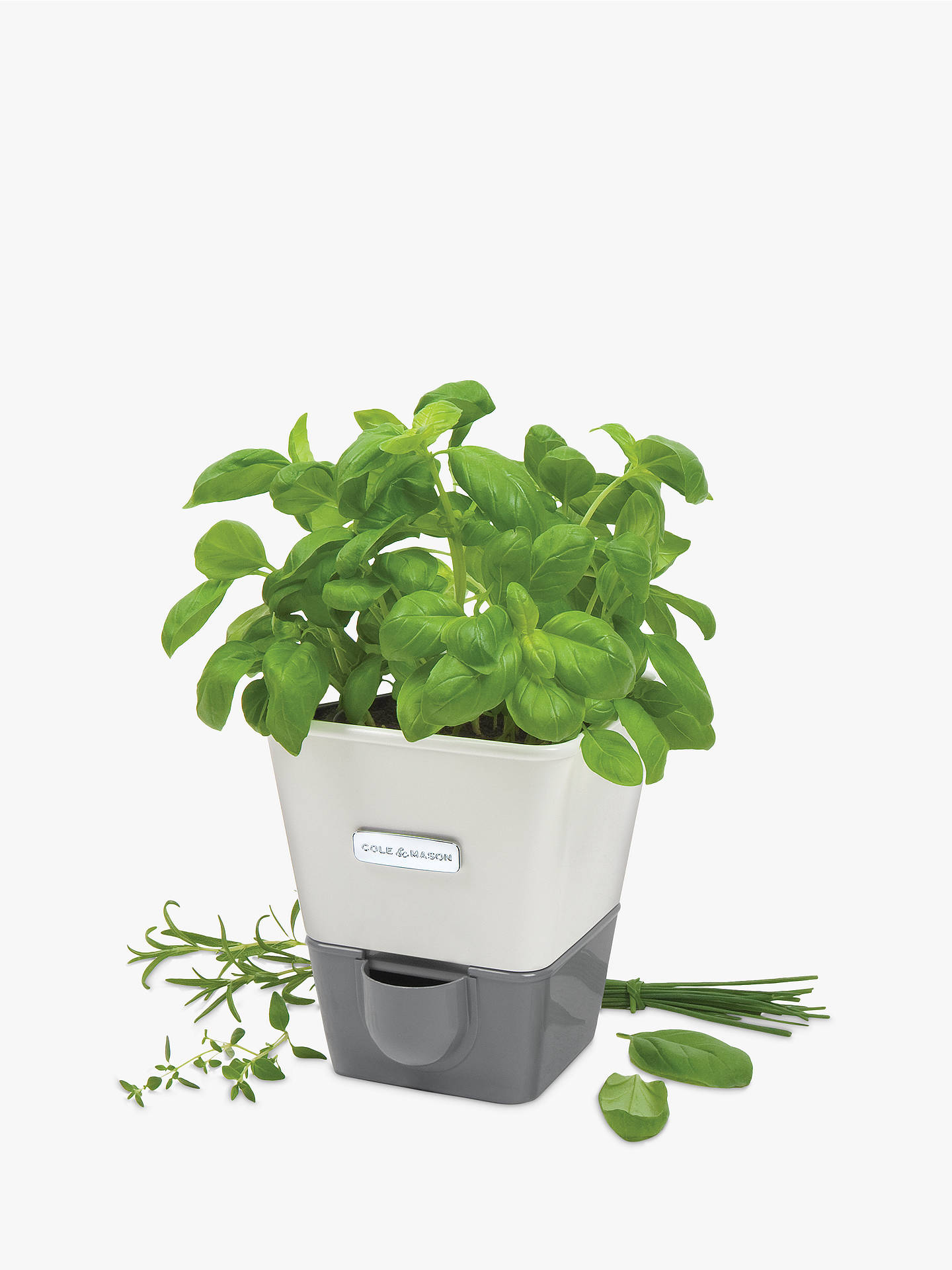 Buy Cole & Mason Potted Herb Keeper, Single Online at johnlewis.com