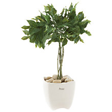 Buy Peony Artificial Bay Tree in a Pot Online at johnlewis.com