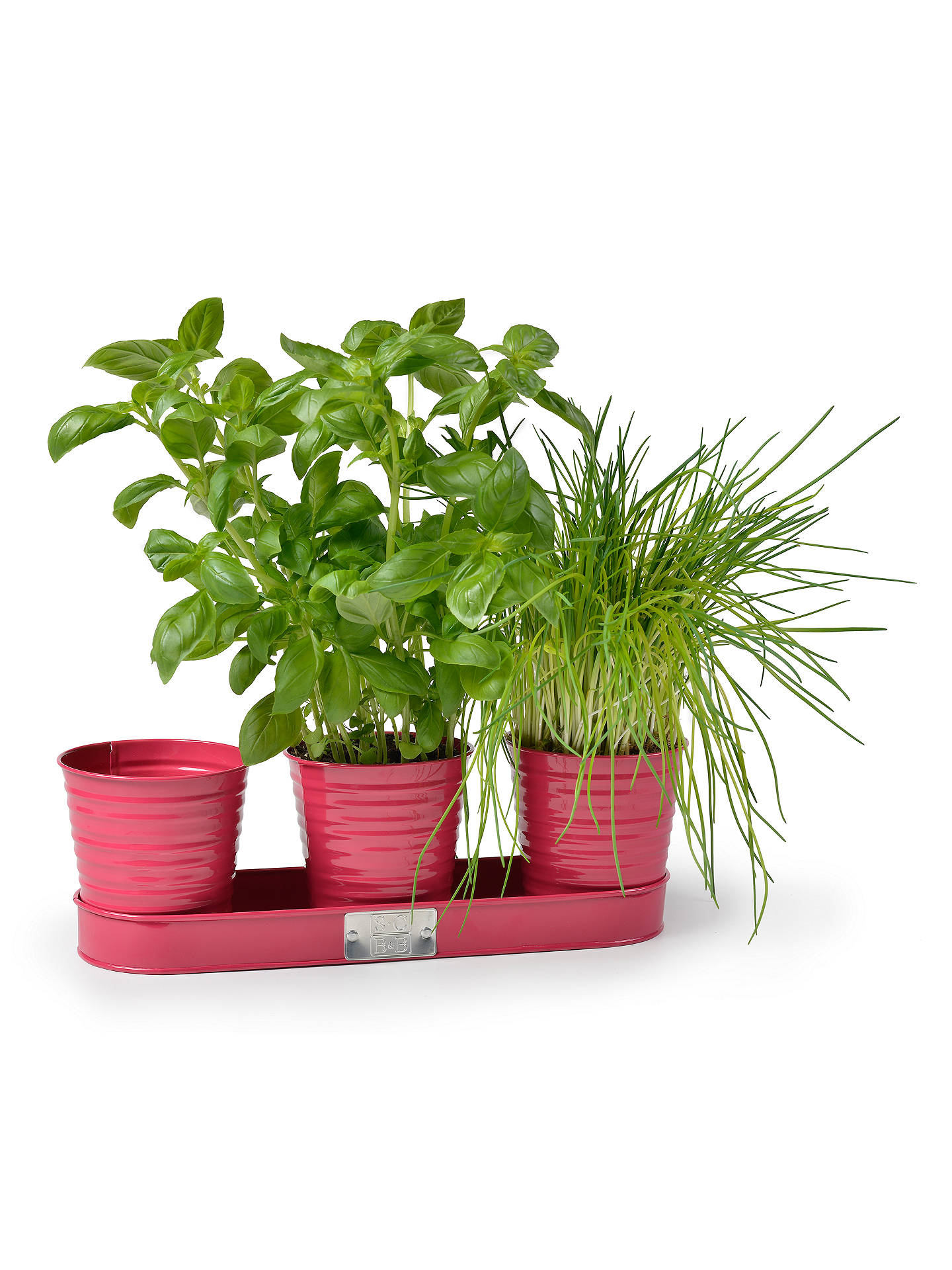 Buy Sophie Conran for Burgon & Ball Herb Pots, Raspberry Online at johnlewis.com