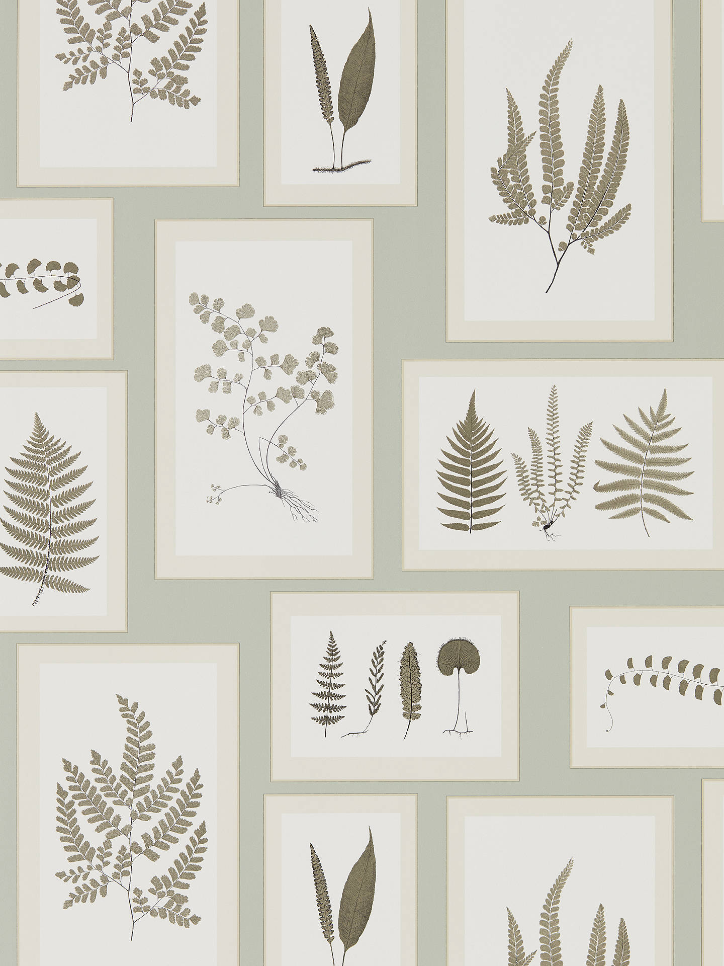 Buy Sanderson Fern Gallery Wallpaper, Blue / Sepia DWOW215715 Online at johnlewis.com
