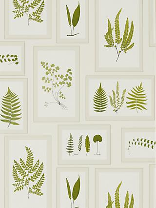 Sanderson Fern Gallery Wallpaper