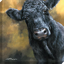 Buy Dina Perejogina - Aberdeen Angus Calf Canvas Print, 80 x 80cm Online at johnlewis.com