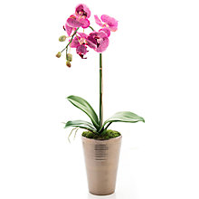 Buy Artificial Peony Phalaenopsis Orchid in Bronze Pot, Pink Online at johnlewis.com