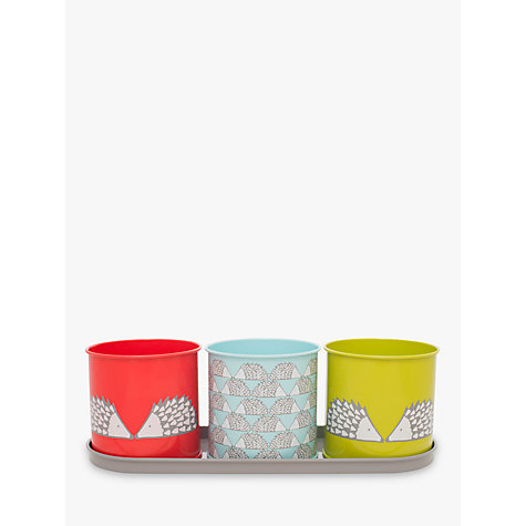 Buy Scion Spike Herb And Plant Pot John Lewis