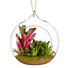 Buy John Lewis Artificial Cactus in Hanging Glass, 12cm Online at johnlewis.com
