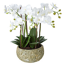 Buy John Lewis Fusion White Artificial Orchid in Clay Pot, 47cm Online at johnlewis.com