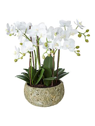 John Lewis & Partners Fusion White Artificial Orchid in Clay Pot, 47cm