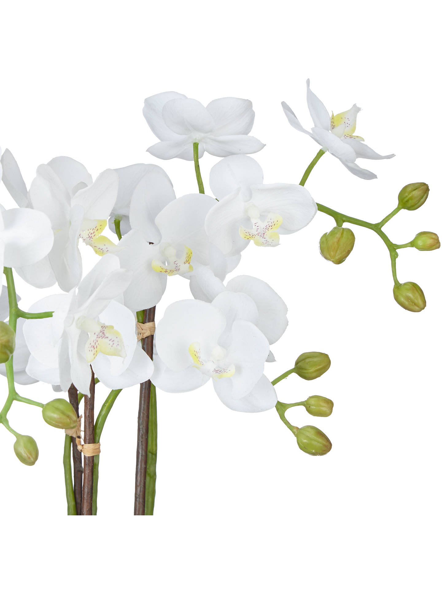 BuyJohn Lewis & Partners Fusion White Artificial Orchid in Clay Pot, 47cm Online at johnlewis.com