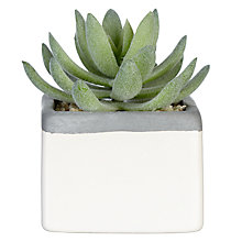 Buy John Lewis Artificial Lotus Succulent in Small Square Pot, 10cm Online at johnlewis.com