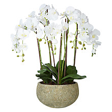 Buy John Lewis Fusion White Artificial Orchid in Clay Pot, 75cm Online at johnlewis.com