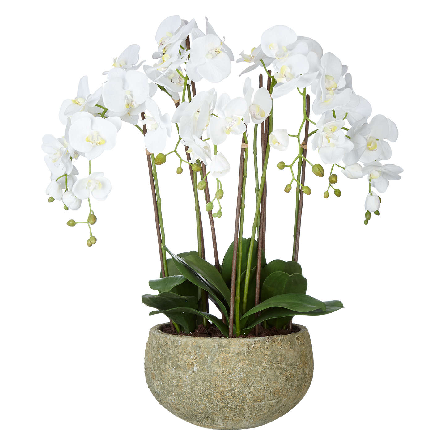 john lewis fusion white artificial orchid in clay pot, 75cm at john